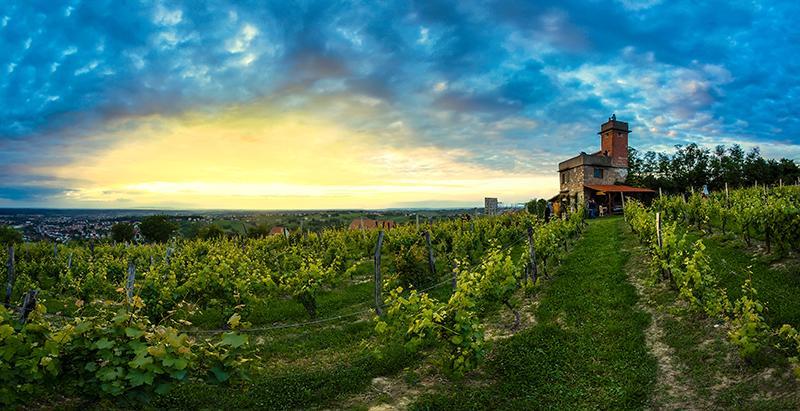 vineyards__large